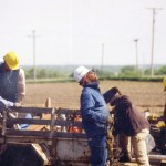 A group of journeyman lineman working on power lines